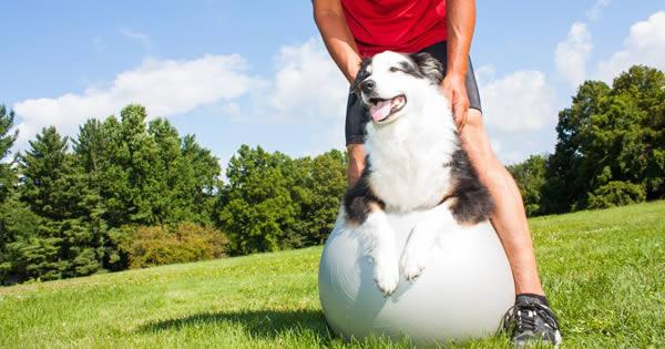 10 Ways Pets Improve Your Health
