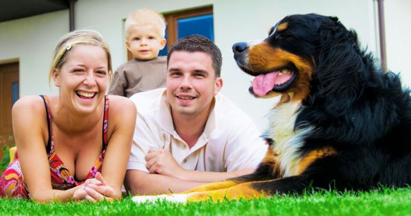 What Does Pet Liability Insurance Cover