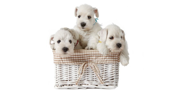 When To Wean Puppies