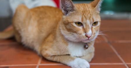 cat paver operator training