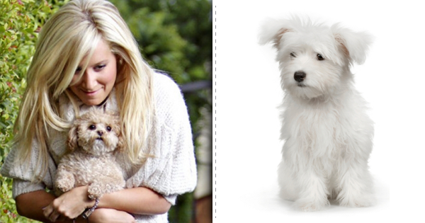 Ashley Tisdale and her Maltese dog