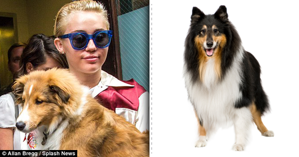 Miley and her dog collie