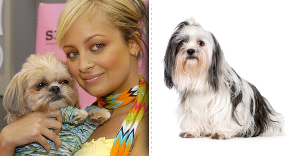 Nicole Ritchie next to her Shih Tzu dog