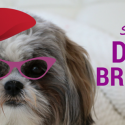 Top Stylish Dog Breeds List