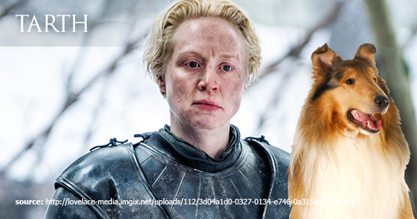 Brienne of Tarth next to a collie dog
