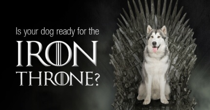 The Best Dog Names Inspired By Game Of Thrones