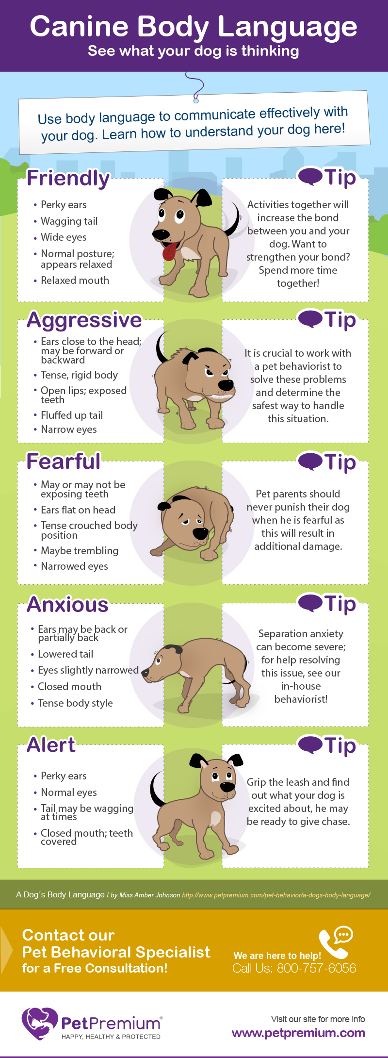 Learn More About Canine Body Language - PetPremium's Infographic