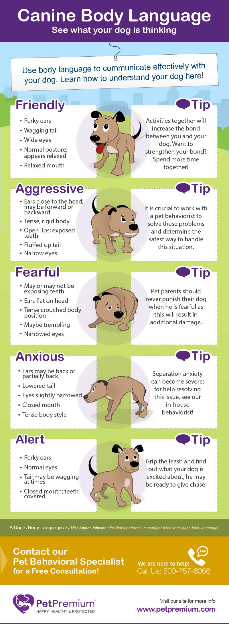 dog body language chart pdf