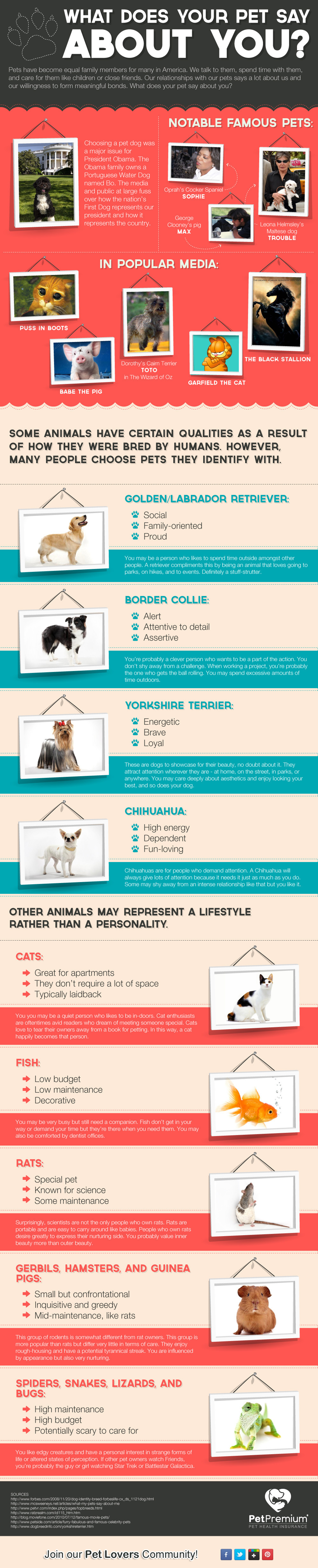 What Your Pet Says About You - PetPremium's Infographic