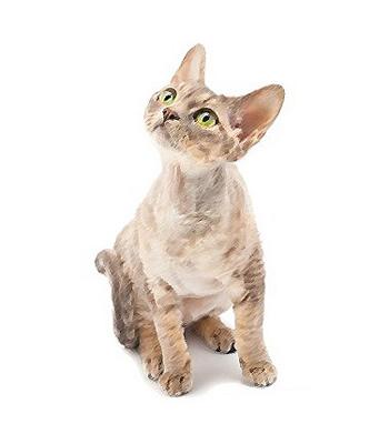 Top Five Hypoallergenic Cats