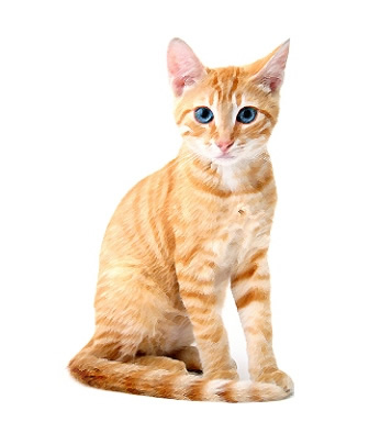 Ojos Azules Cat - PetPremium