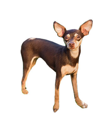 Best Ratters Dogs Or Cats