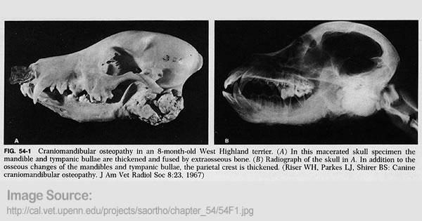 Craniomandibular Oseopathy
