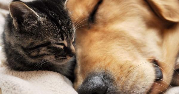 Excessive Sleeping