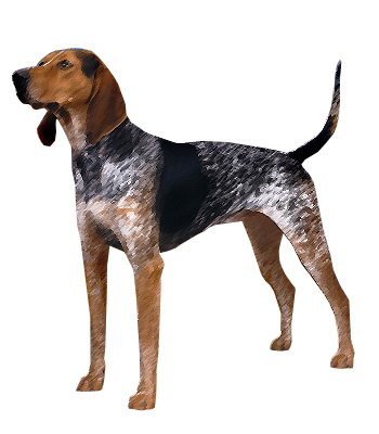 English Coonhound image
