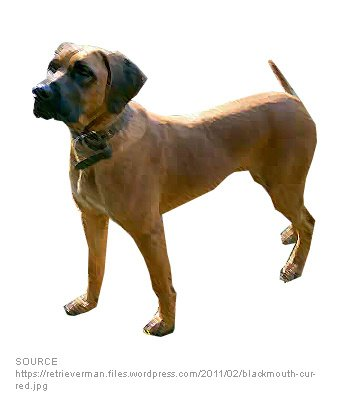 Black Mouth Cur image