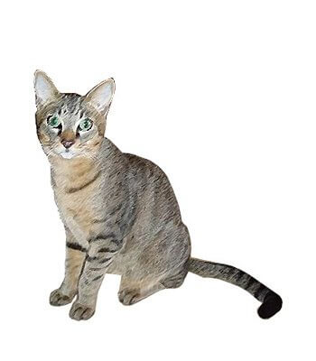 Chausie image