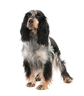Springer Spaniel Breeders Colorado - Goldenacresdogs com