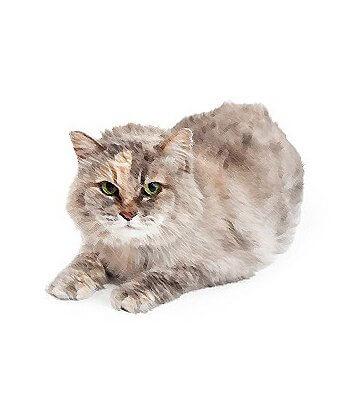 Highland Lynx Cat image