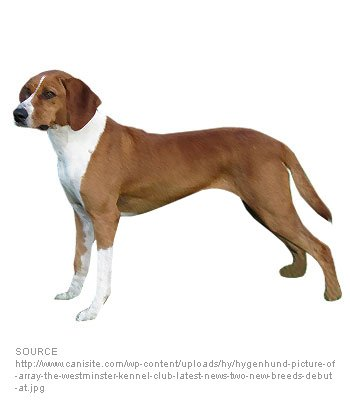 Hygenhund image
