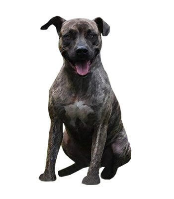 Mountain Cur image