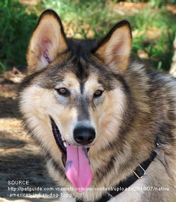 Native American Indian Dog image
