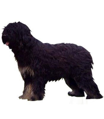 Portuguese Sheepdog image