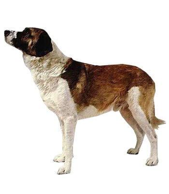 Portuguese Watchdog