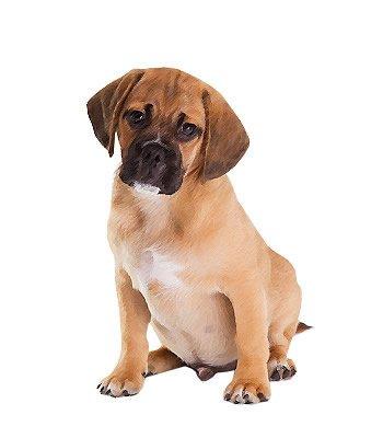 Pug Mix image