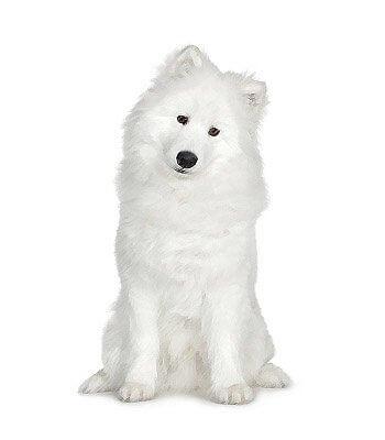 Samoyed image