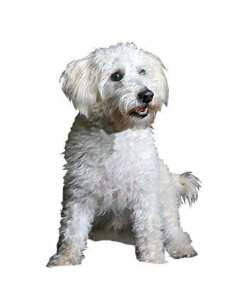 Schnoodle image