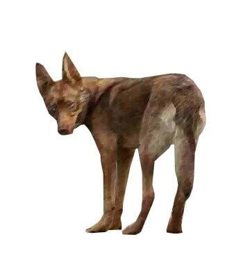 Tahltan Bear Dog