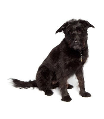 Terrier Mix image