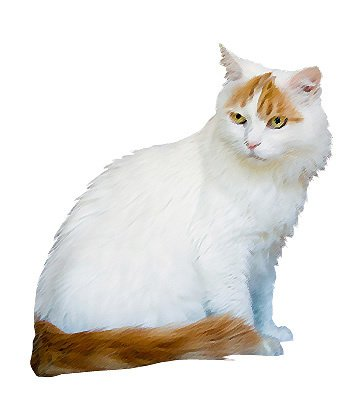 Turkish Van image