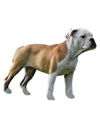 Victorian Bulldog image